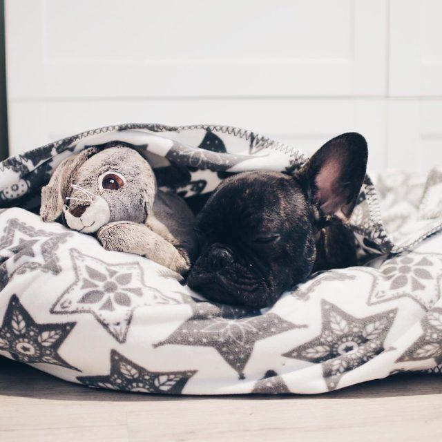 Dormindo com o meu coelhinho
